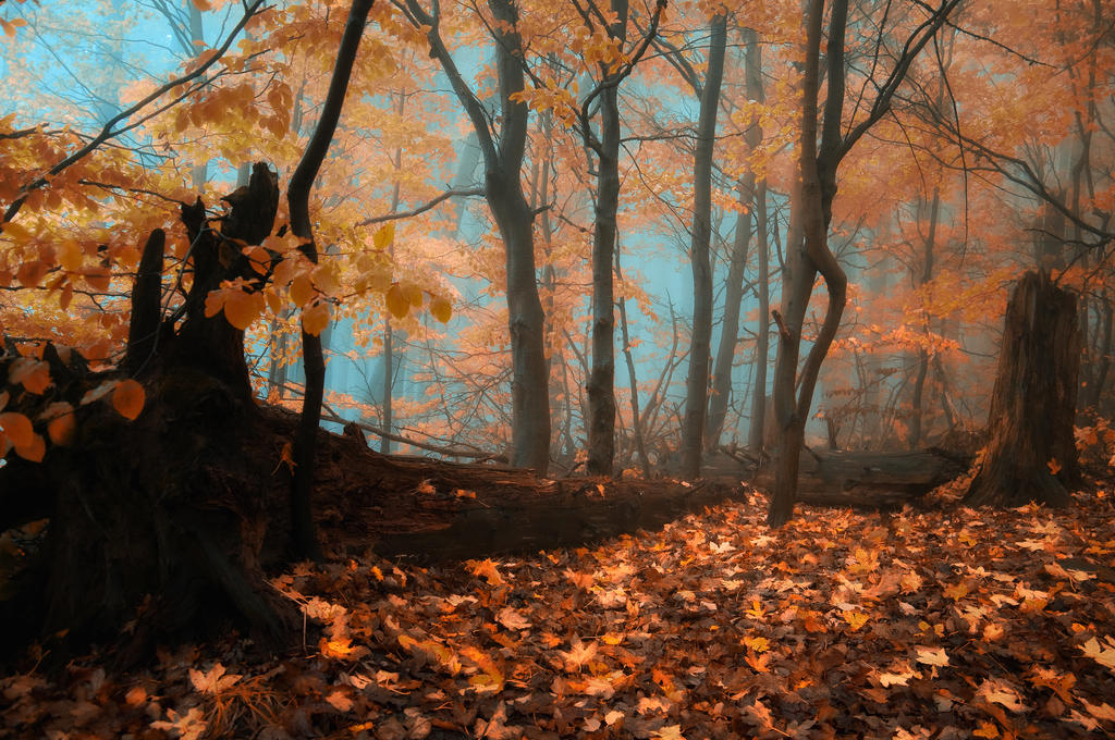-Quiet blues of fallen leaves- by Janek-Sedlar