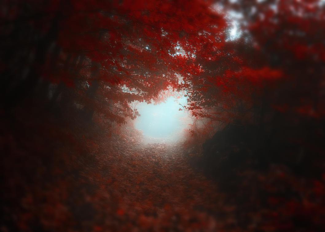 -Road to Self- by Janek-Sedlar