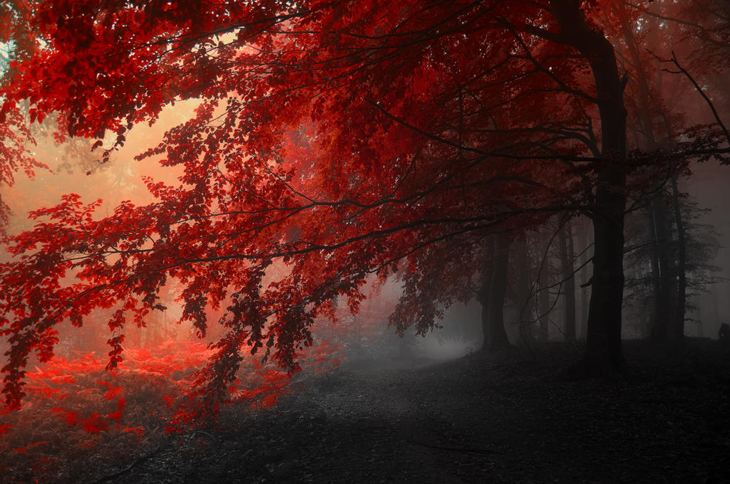 -Love dont know the death- by Janek-Sedlar