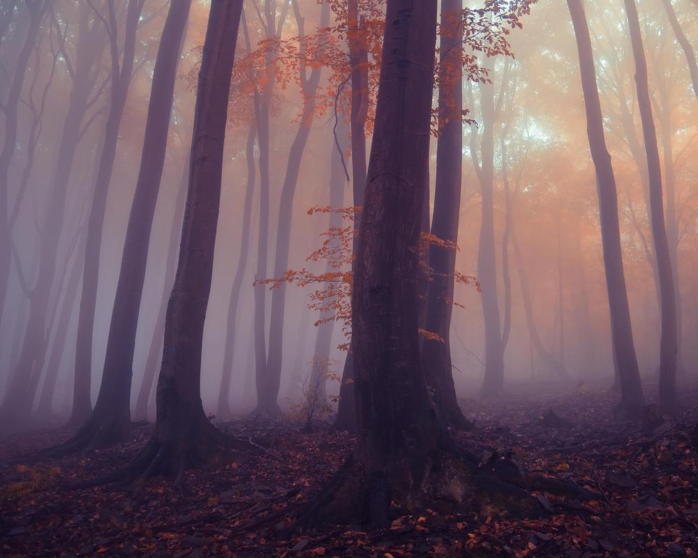 -Gentle caress- by Janek-Sedlar