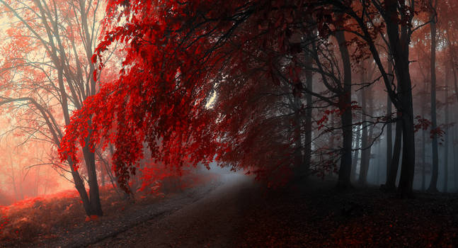 -Through inner world- by Janek-Sedlar
