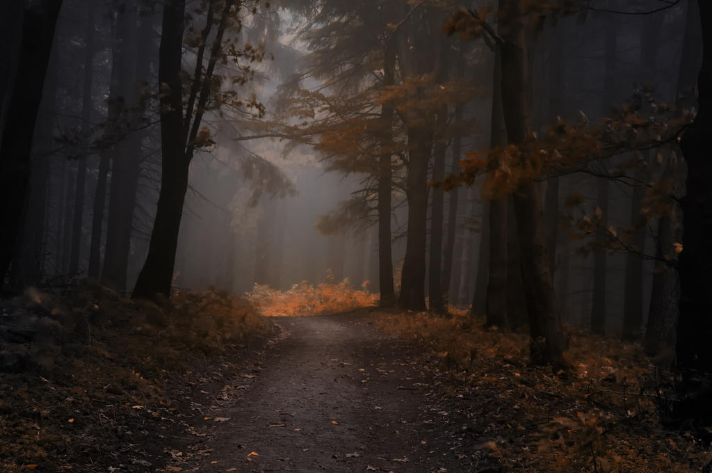 -Quiet in woods- by Janek-Sedlar