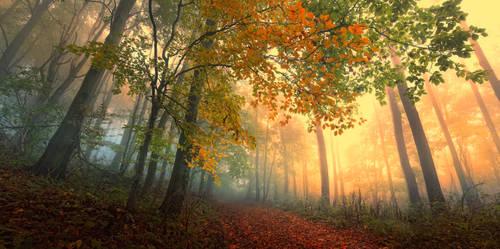 -Anxious poetry of autumn-