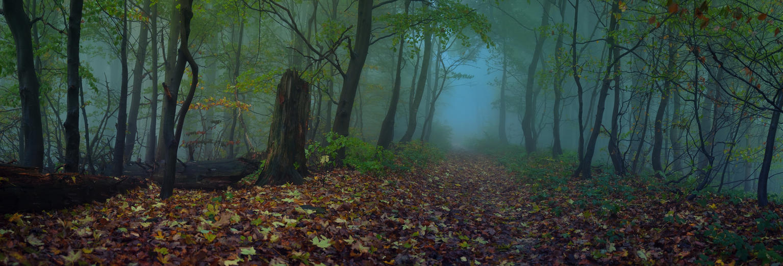 -Wisdom of the forest- by Janek-Sedlar