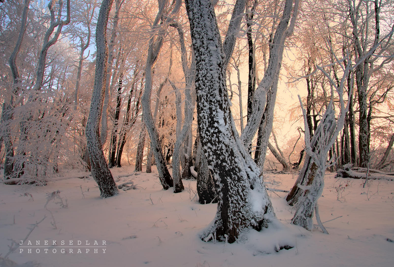 -Magic wand of daddy Frost- by Janek-Sedlar