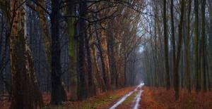 -The road of elders-