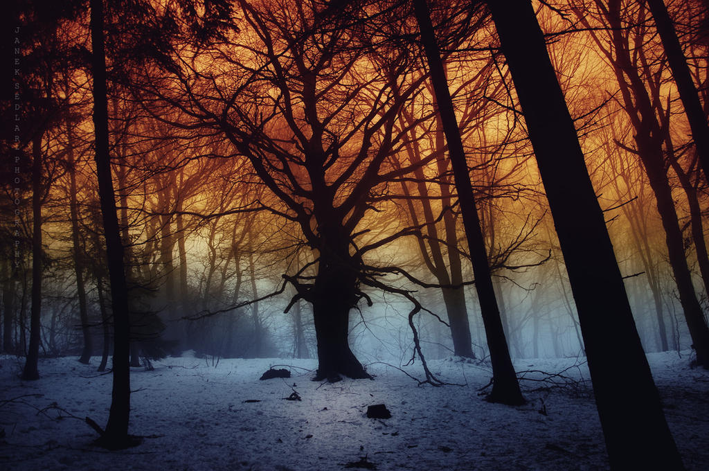 -Tree of imagination- by Janek-Sedlar