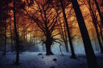 -Tree of imagination-