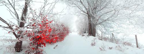 -Last red poem-