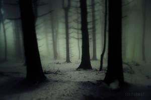 -Dark Forest-