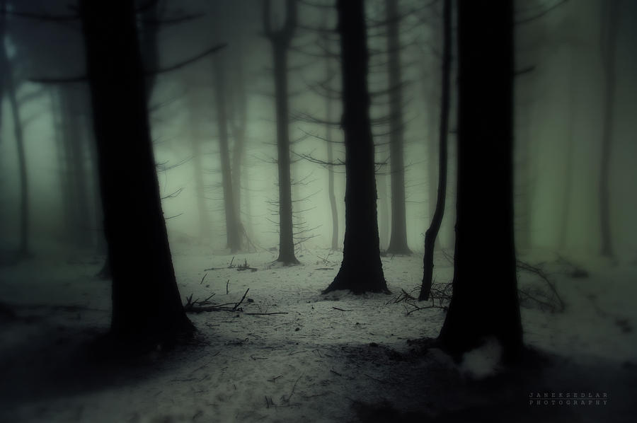 -Dark Forest- by Janek-Sedlar