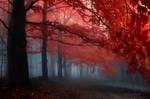 -Melody of my heart- by Janek-Sedlar