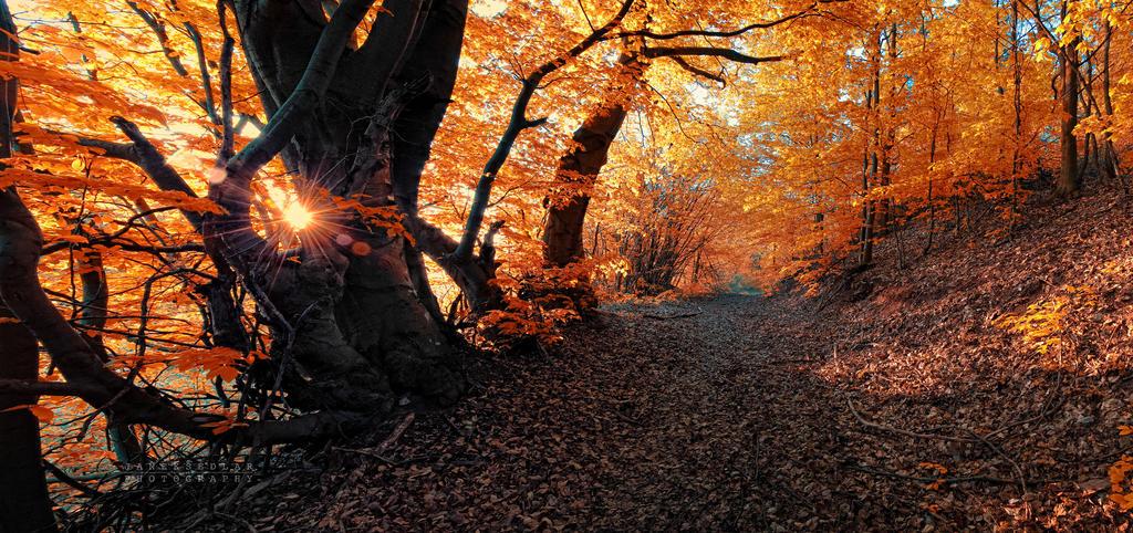 -On the sunny road- by Janek-Sedlar