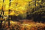 -Yellowood-