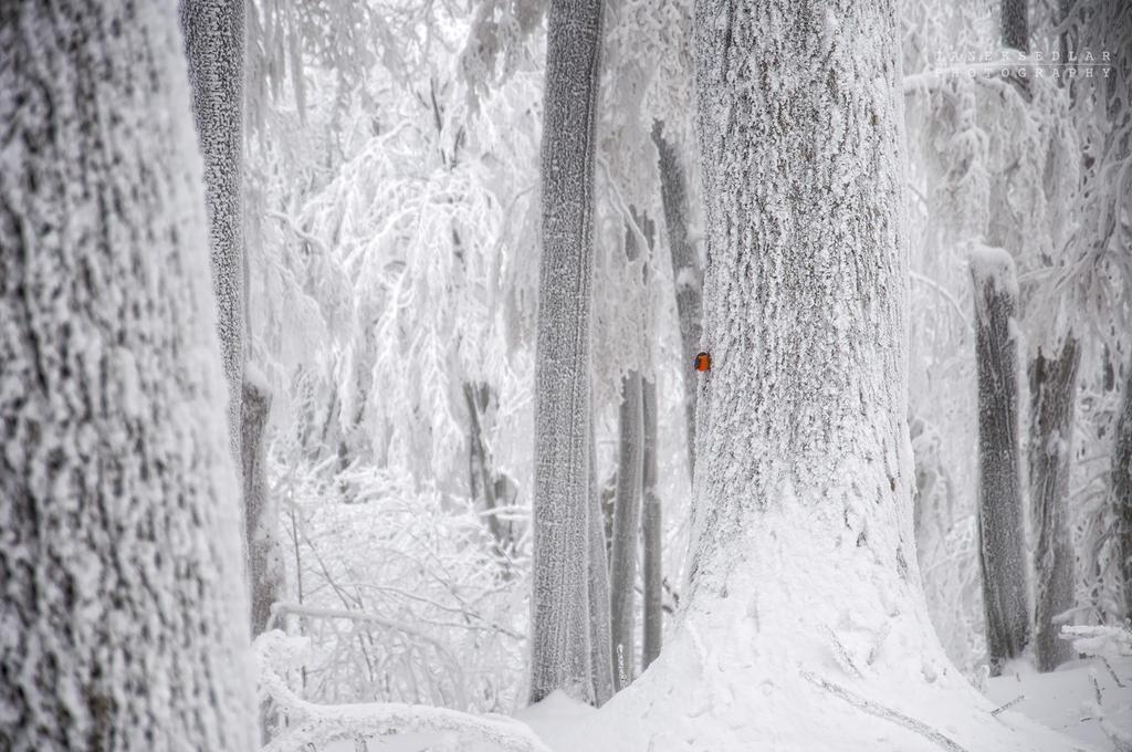 -Little red bird and white giants- by Janek-Sedlar
