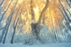 -Summoning the sun- by Janek-Sedlar
