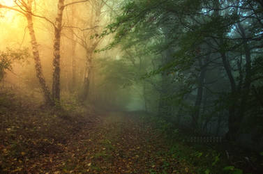 -Sensitive delight- by Janek-Sedlar