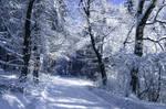 -Frozen road-