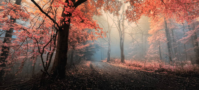 -Eternal sunshine of the inside world-