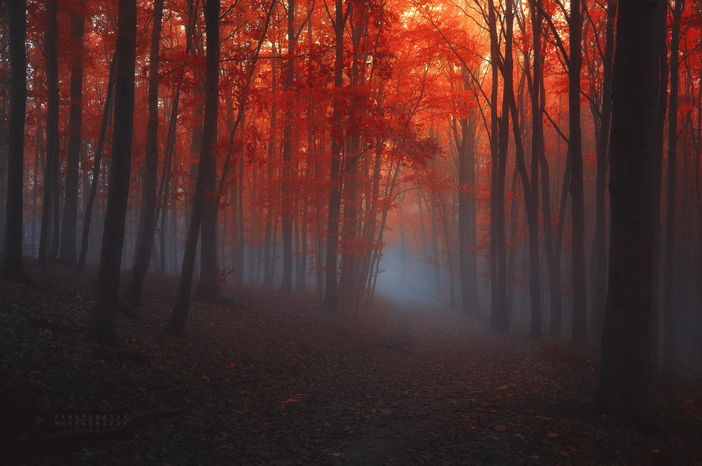 -Abandoned remembrance- by Janek-Sedlar