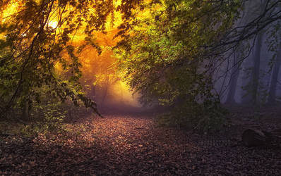-Quiet present of light and shadows- by Janek-Sedlar