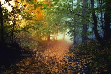 -Depth of the forest energy- by Janek-Sedlar