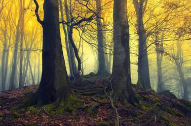 -Yellow myth- by Janek-Sedlar