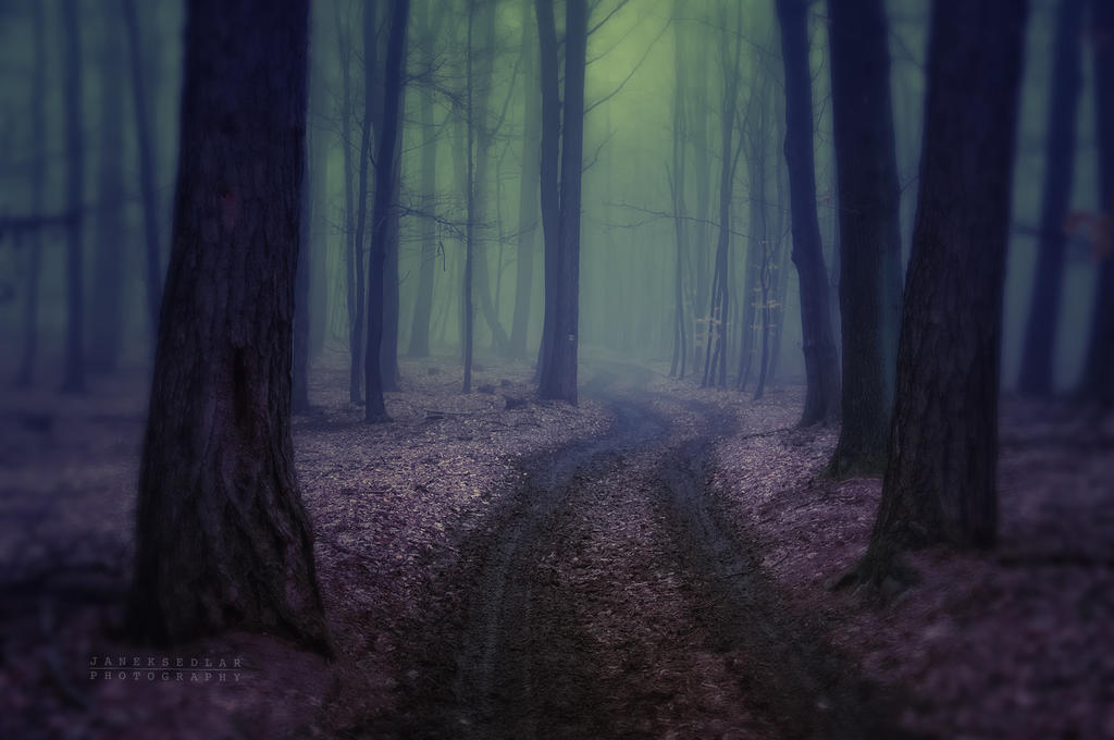 -Where the dreams come from- by Janek-Sedlar