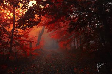 -Forest in my heart- by Janek-Sedlar