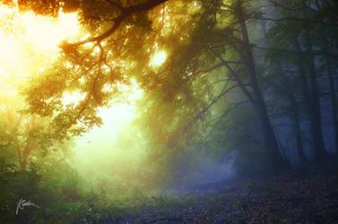 -Secret forest energies- by Janek-Sedlar