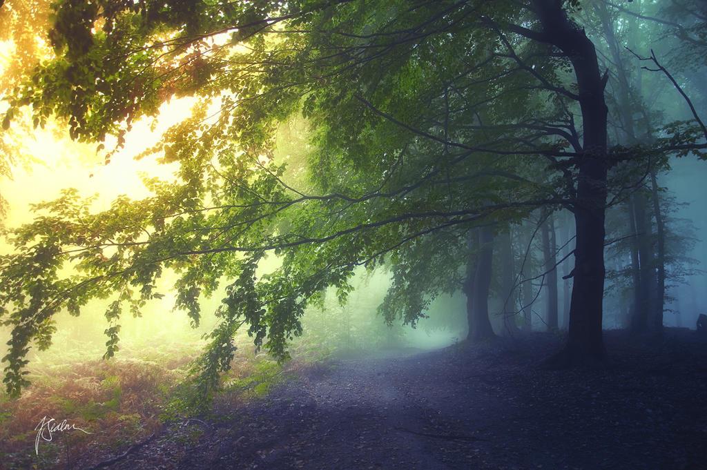 -Where fairies live- by Janek-Sedlar
