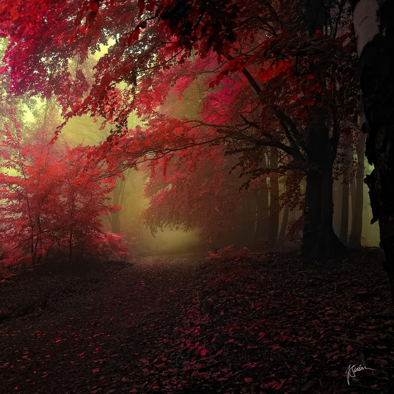 -Message from another dimension- by Janek-Sedlar