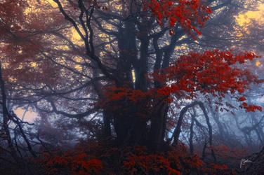 -King of hidden secrets- by Janek-Sedlar