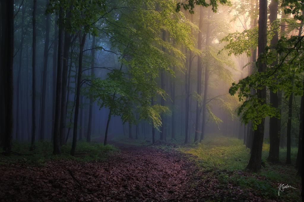 -Forest energies- by Janek-Sedlar