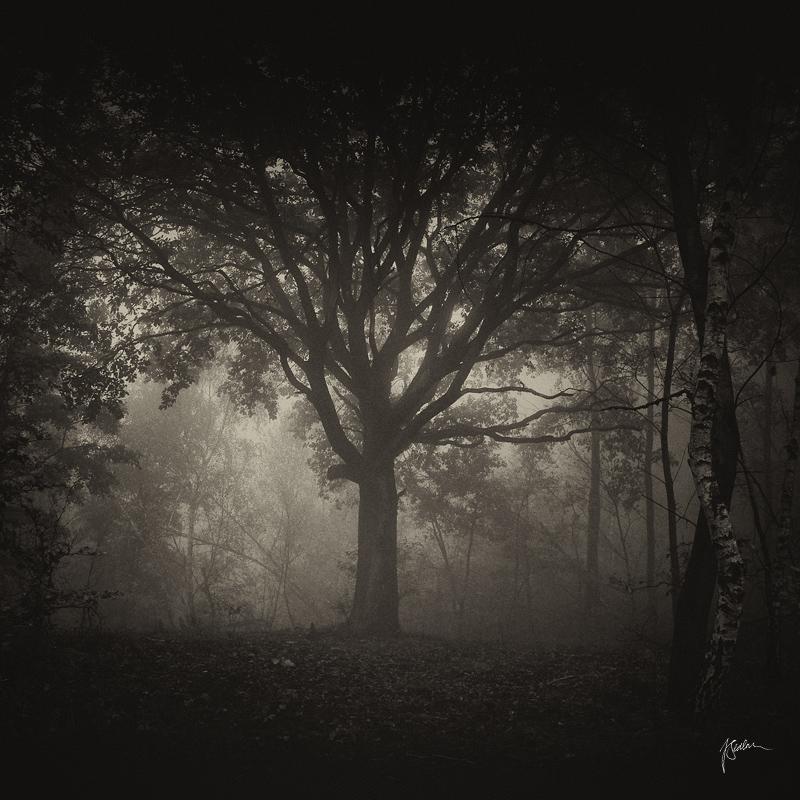 -Ancient scroll- by Janek-Sedlar