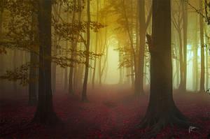 -Golden hour- by Janek-Sedlar