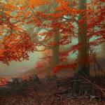 -Ancient calling of autumn-