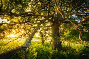 -Wisdom of the trees- by Janek-Sedlar
