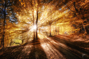 -Autumnal dreaming- by Janek-Sedlar