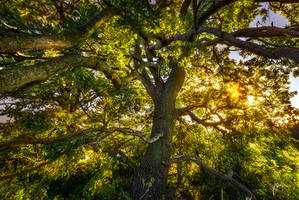 -Wisdom of the trees II- by Janek-Sedlar