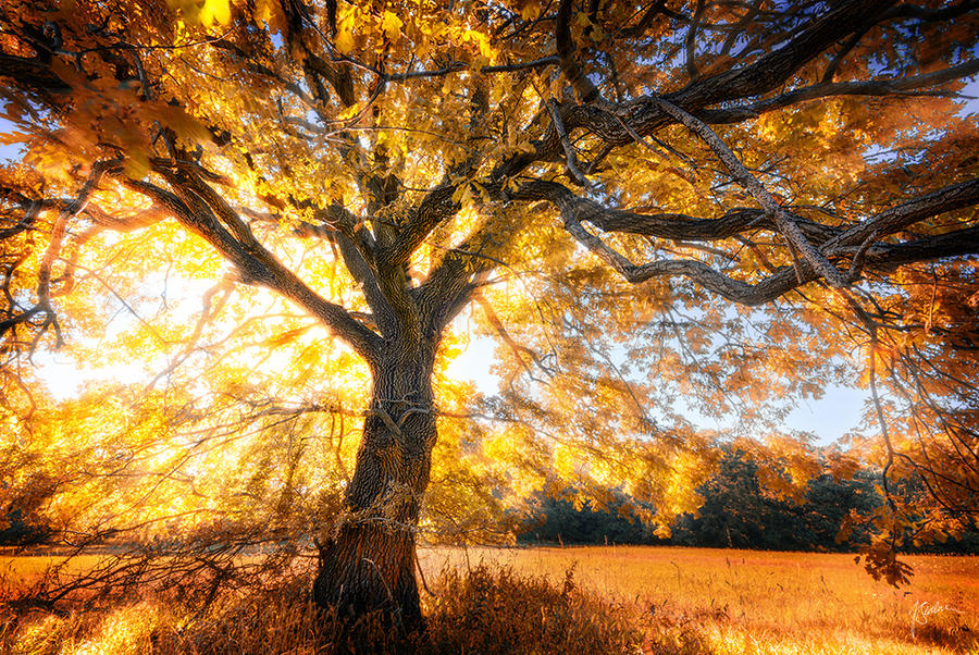 -Flaming tree- by Janek-Sedlar