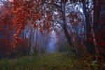 -Mystic morning- by Janek-Sedlar