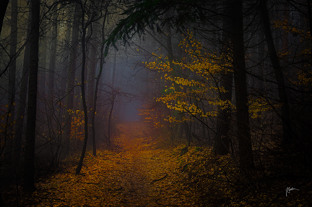 -Talking with shades- by Janek-Sedlar