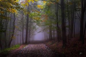 -Yesterday rainy road- by Janek-Sedlar