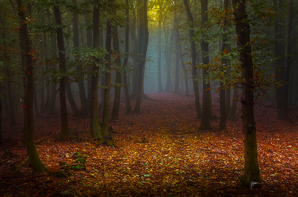 -Forest opening- by Janek-Sedlar
