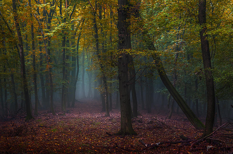 -Silence delight- by Janek-Sedlar