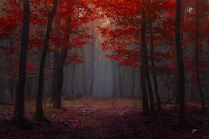 -Lost red story- by Janek-Sedlar