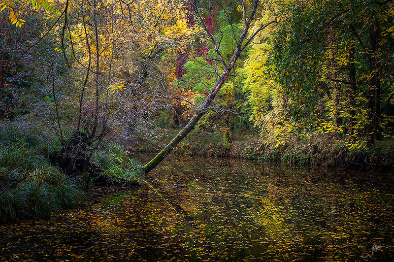 -Quiet of the fall- by Janek-Sedlar