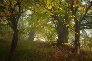 -Colors and dancing trees- by Janek-Sedlar