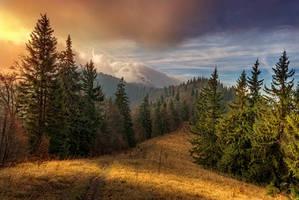 -At beginning of the day- by Janek-Sedlar